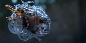 Fractal Injector by Dr-Koesters
