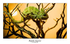 Reptile Sunrise by CaosSpain