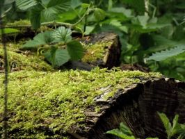 Moss on a Log by tapity-feet