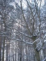 Snow on trees by Lukotus