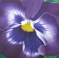 Pansy by I-Am-Coma-White