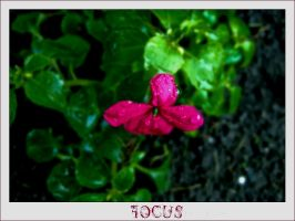 Focus by Heymilie
