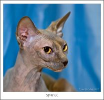 Statuesque Sphynx by substar