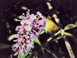 Yellow Moth Butterfly Creature Thing by LittleRedx41