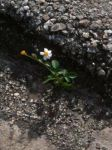 Flower in the Cemetary by I-am-the-Wolf