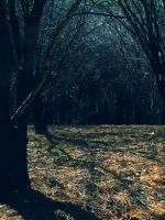 _cubamarshthicket1_ by CalenthrellII