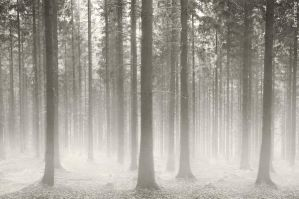 Polish Forest by BenHeine