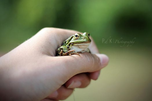 Frog in my hand by electrogrunge