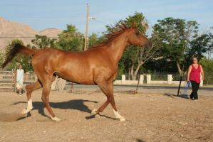 Horse 182 by Mustang4-Stock