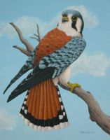 American Kestrel by TabLynn