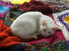 Cat on Rug by meow15