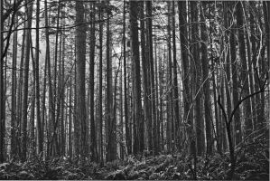 The Black Forest by treeblue