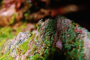 Mountain of Moss 2 by nazzara