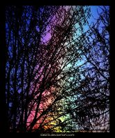 Rainbow Behind Tree by kiebitz