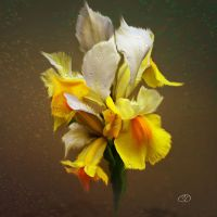 IRIS NAIN 2 (PRINTEMPS 2013 24) by BELLESYMPHORINE