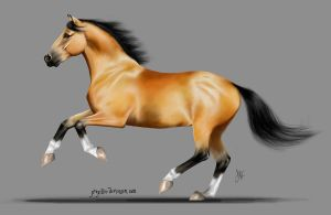 Bay horse by Propilley