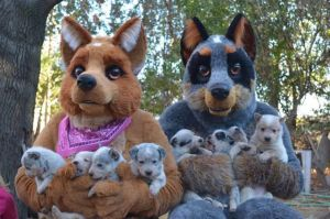 Australian Cattle Dog Mascots by LilleahWest