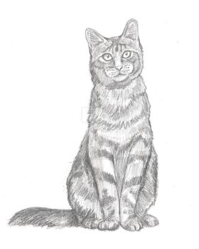 Cat Drawing by Carrietivity