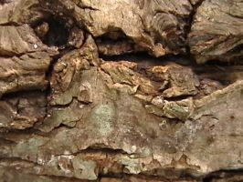 Texture - Wood 27 by texture-resources