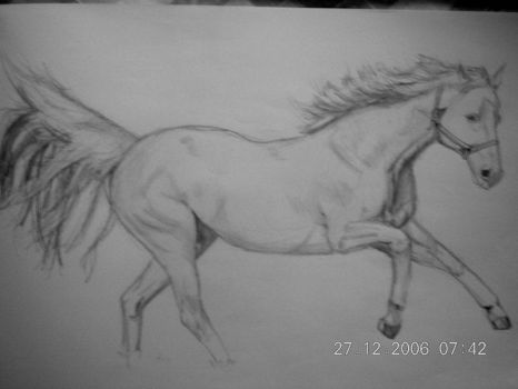 A horsey by cupid519