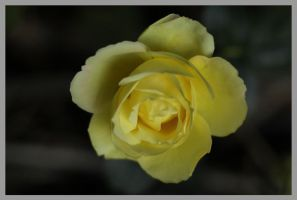 Mellow Reen by Redsterfish