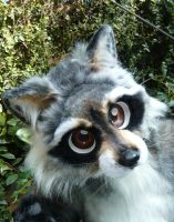 coon closeup by LilleahWest