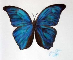 Blue Morpho Butterfly by Xiaomei23