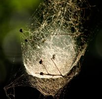 World of Web by alimuse