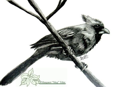 Example- Traditional Black and White Pencil Piece by lilly-peacecraft