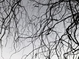 branches in the winter sky by littleAkvile