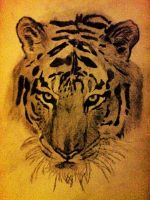 Tiger - Drawing by AfroAfrican