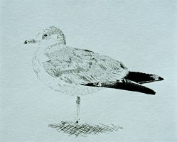 Seagull by musicality84