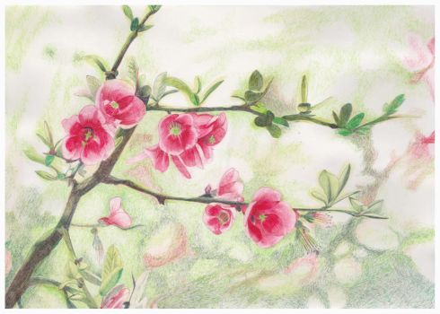 Pink Blossom by HelenParkinson