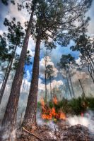 Florida Forest Fire by Mjag