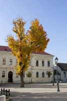 Tree in Front of a School by Anonimus79