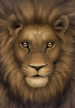 Lion by Beffana