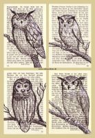 Page Owls by ankewehner