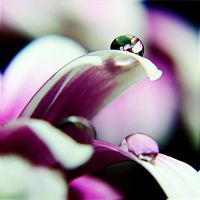 Droplet 20 by josgoh
