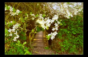 Blossom Bridge by Forestina-Fotos
