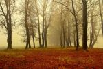 Foggy Woods III by valiunic