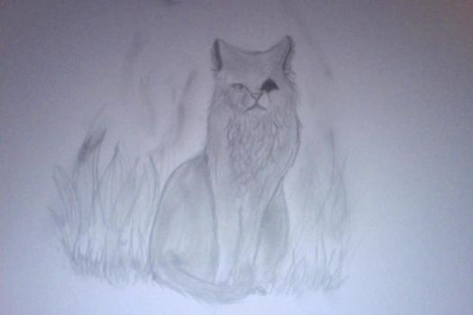 Realistic Cat drawing by XsilverdawnwarriorX