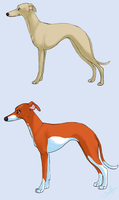 whippet variation - part 1 by shelzie