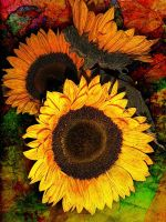 Sunflowers by Tackon