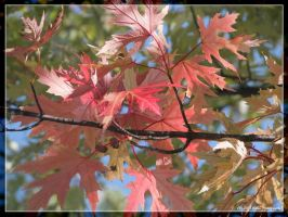 Leafs 2 by Timm45
