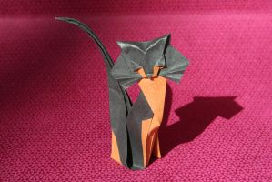 Cat by origamaniac