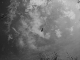 To Soar High - Turkey Vulture by roamingtigress