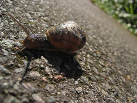 Snail the second by MrCog