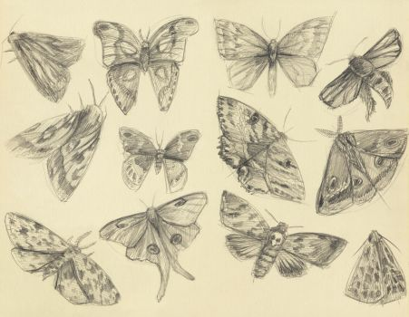 Moths by Fiction69