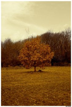 Golden tree by Sam-Bacon