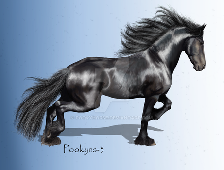 Friesian Show Off by pookyhorse